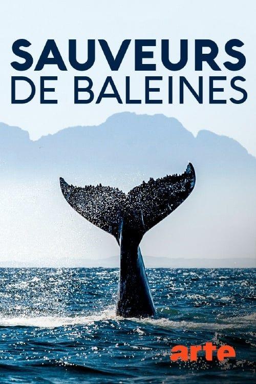 Key visual ofInselhelden: Die Wal-Retter von Campobello Island