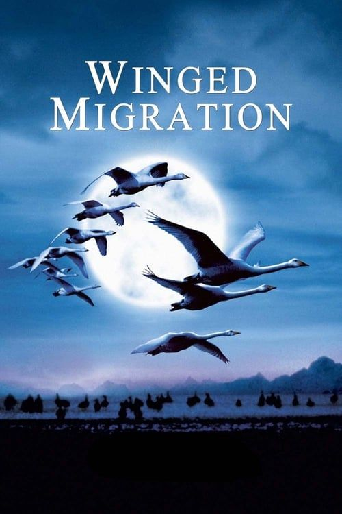 Key visual of Winged Migration