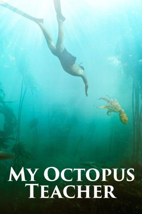 Key visual of My Octopus Teacher