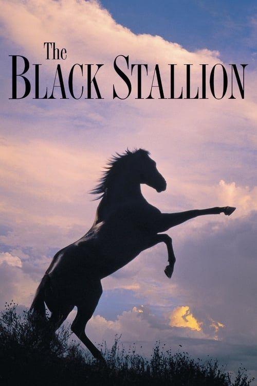 Key visual of The Black Stallion