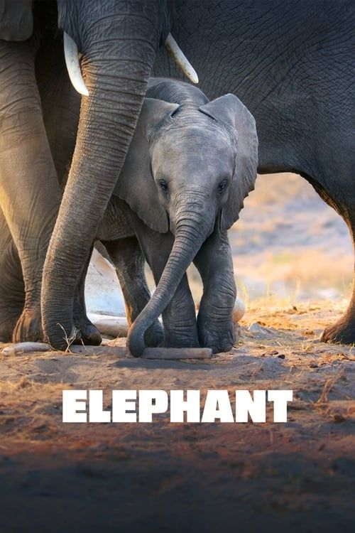 Key visual of Elephant